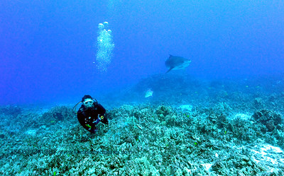 divers tigershark turtleheaven3 092117thurs