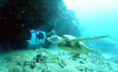divers turtleheaven4 092017wed