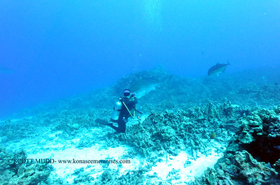 divers tigershark turtleheaven8 092117thurs