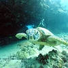 diver turtle turtleheaven 092017wed