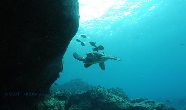 greenseaturtle turtleheaven8 092017wed