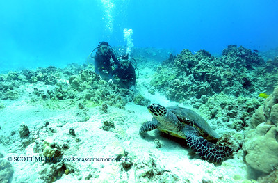 divers turtle turtleheaven5 091217tues