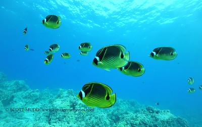 raccoonbutterflyfish naiabay2 091817mon