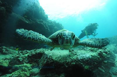 greenseaturtle turtleheaven4 092017wed