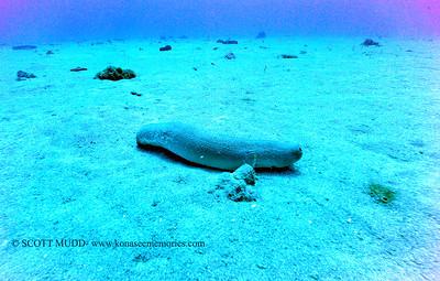 seacucumber naiabay 090617wed