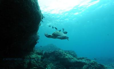 greenseaturtle turtleheaven7 092017wed