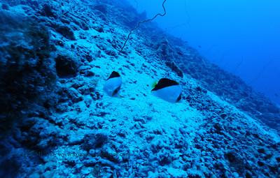 tinkersbutterflyfish oldairport2 090517tues