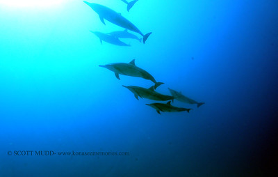 spinnerdolphins naiabay 090617wed