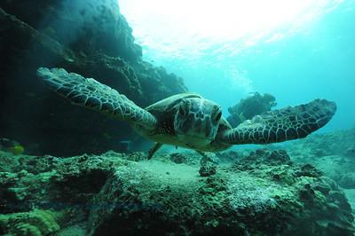 greenseaturtle turtleheaven5 092017wed