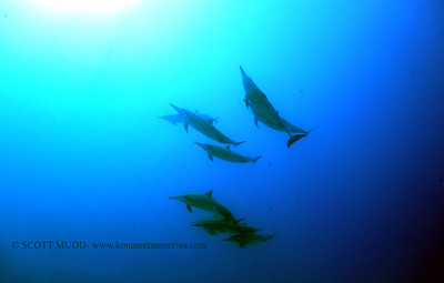 spinnerdolphins naiabay2 090617wed