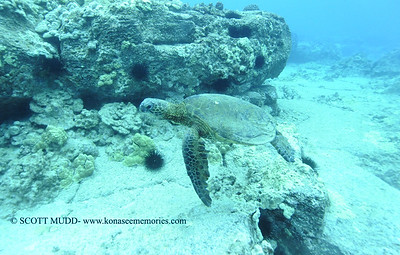 wired greenseaturtle turtleheaven3 012718sat