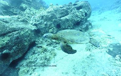wired greenseaturtle turtleheaven2 012718sat