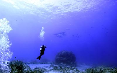 divers dolphins turtleheaven 012218mon