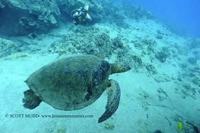 diver turtle turtleheaven 012718sat