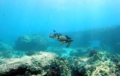 greenseaturtle turtleheaven2 100717sat