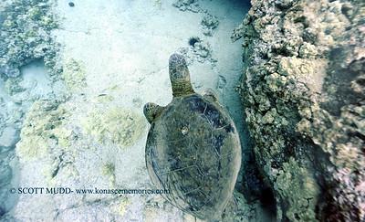 wired greenseaturtle turtleheaven 012718sat