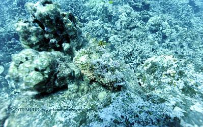 titanscorpionfish carousel2 010218tues