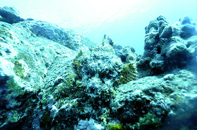 titanscorpionfish carousel4 010218tues