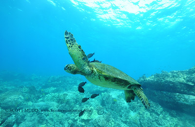 greenseaturtle turtleheaven 100717sat