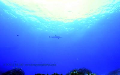 spinnerdolphin turtleheaven 012718sat