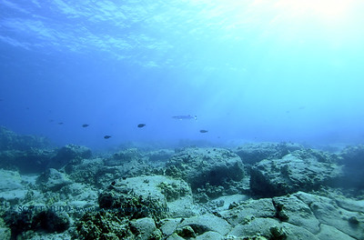 greatbarracuda turtleheaven 013118wed