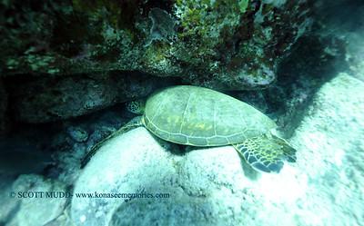 greenseaturtle turtleheaven 013118wed
