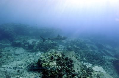 tiger shark turtleheaven2 022818wed