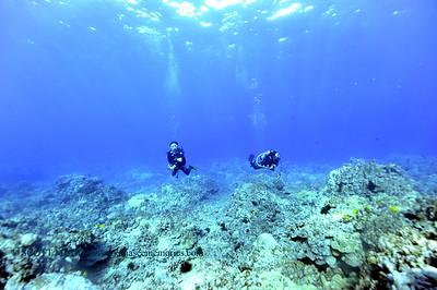 divers naiabay4 020118thurs