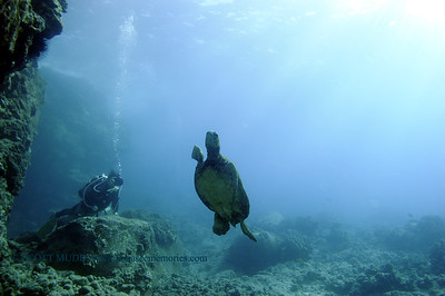 diver seaturtle turtleheaven 020618tues
