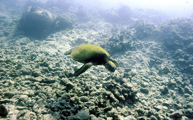 greenseaturtle turtleheaven3 020618tues