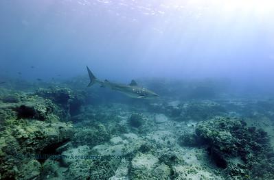 tiger shark turtleheaven5 022818wed