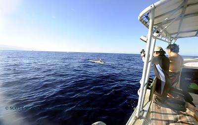 humpbackwhale umikatana 020118thurs