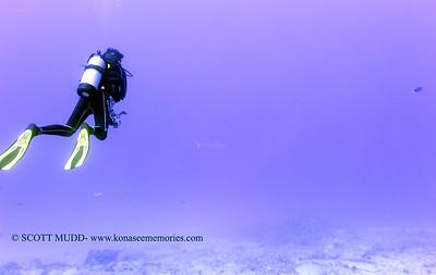 divers tigershark naiabay 020118thurs