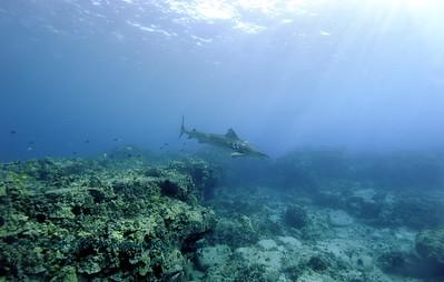 tiger shark turtleheaven7 022818wed