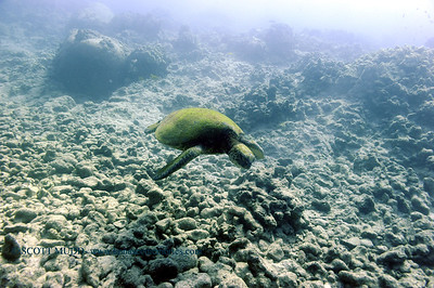 greenseaturtle turtleheaven2 020618tues