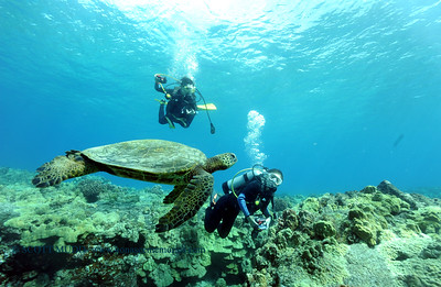 divers and turtle (ダイバー達とカメ)