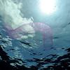 squid egg sac (イカの卵袋)