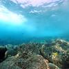 underwater scenery (水中風景)