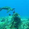 greensea turtles (アオウミガメ達)