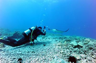 diver and manta (ダイバーとマンタ)