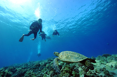 divers and turtle(ダイバー達とカメ)