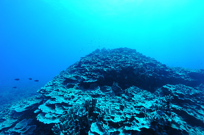 coral (珊瑚)