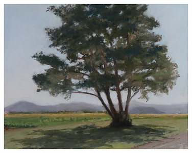 Sunlit Tree 8 x 10 (C)