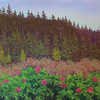 Roses by the Marsh 14 x 18 Pastel