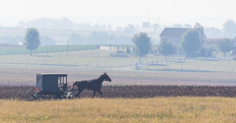 Early Morning Buggy Ride_Pat Hoffman.jpg