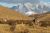 Pair of rheas in the mountains, Torres del Paine, Patagonia