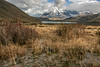 Clouds over Torres del Paine, fall vegetation and white wildflowers, Patagonia