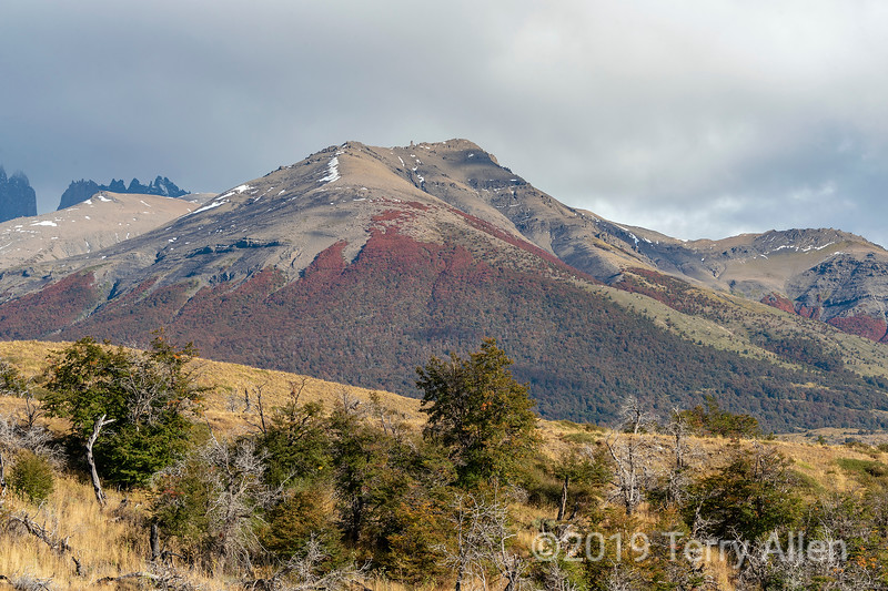 Fall colours on the hills at Torres del Paine near the Paine Cascades, Patagonia