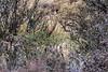 Puma hiding in the bush, Torres del Paine, Patagonia