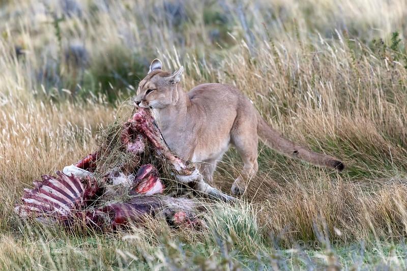 Rarranging the carcass